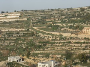 Al sanabel_vignes et arbres fruitiers en terrasse